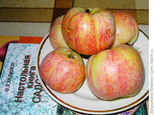 Яблоки конфетной.