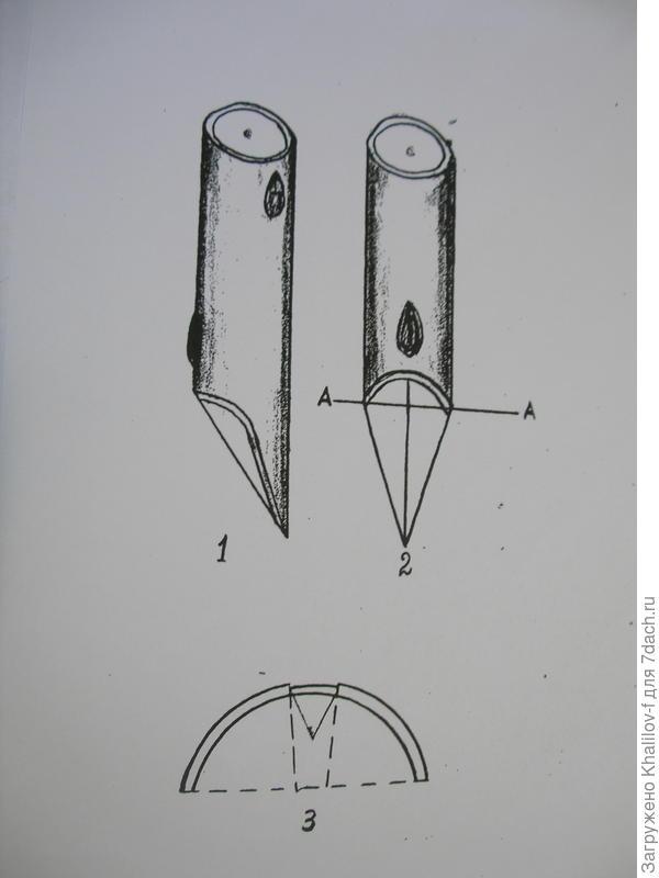 Прививка врасщеп. 1) Подготовленный привой, вид сбоку. 2) Привой, вид спереди. 3) Выполненная прививка (вид сверху).