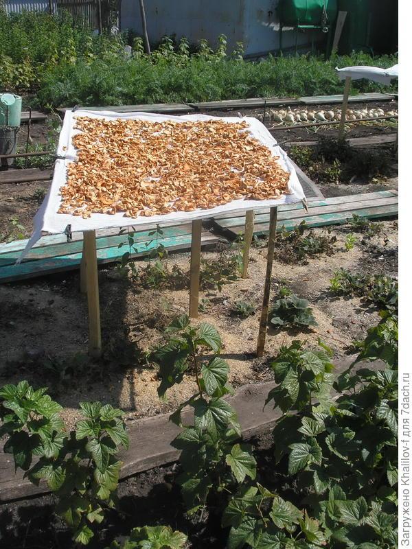 Сушка грибов, если надо яблок и прочих ягод и фруктов
