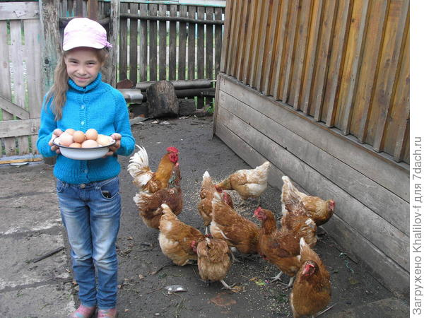 Внучка Наиля собрала яйца. Видно же, что много, она же, в конце концов не вынесла с холодильника и вчерашние, чтобы похвалиться.