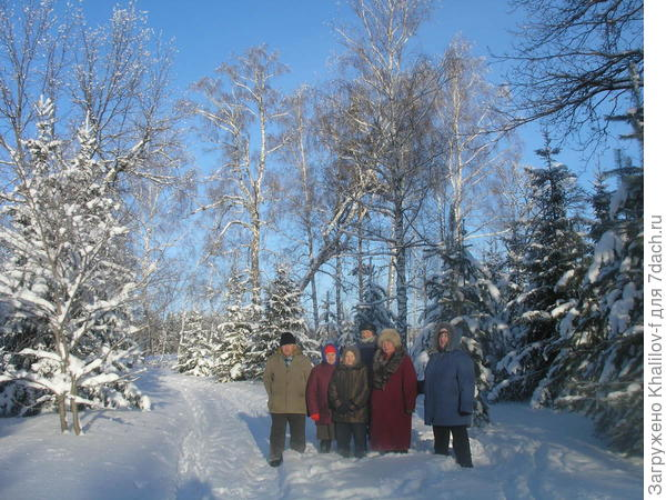 Мы пенсионеры на ежедневной (почти) прогулке в зимнем лесу.