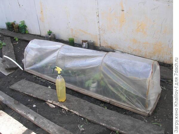 Парничок для размножения винограда способом зелёного черенкования.
