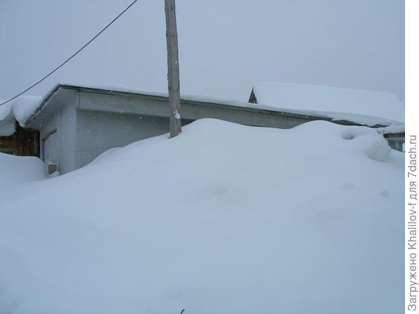 Снег по крышу гаража, а в 1.5 м от гаража 4-5 кустов смородины не выпревают же...
