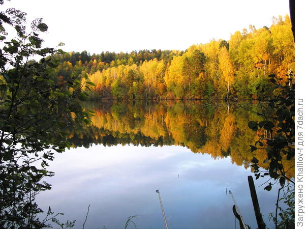 Осень мой карповый пруд