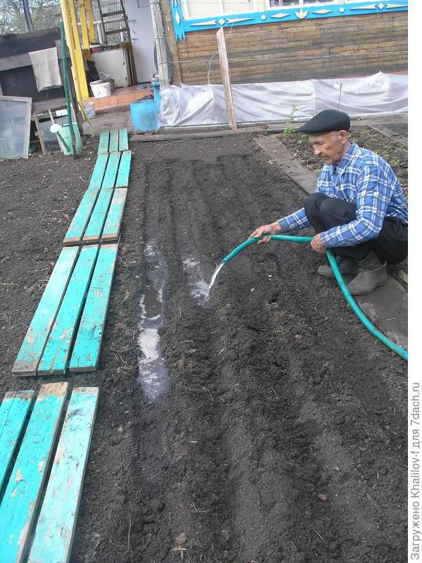 Подготовка грядки моркови (и свеклы). Бороздки через 25 см сделаны и проливаются из шланга водой до полного промачивания, чтобы был хороший запас влаги под семенами