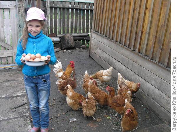 Внучка Наиля очень любит собирать яйца