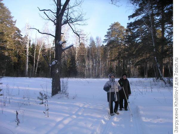 На прогулке в зимнем лесу.