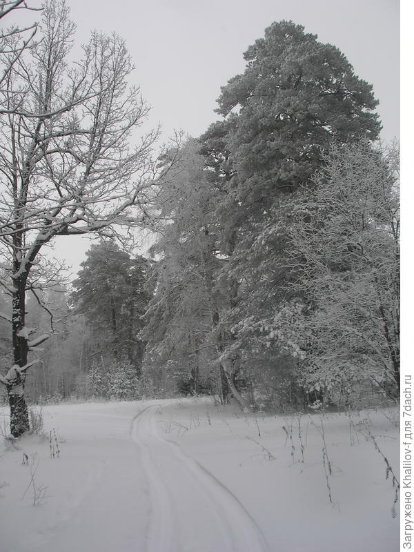 Наша тропинка. Недавно прошел снегоход Буран