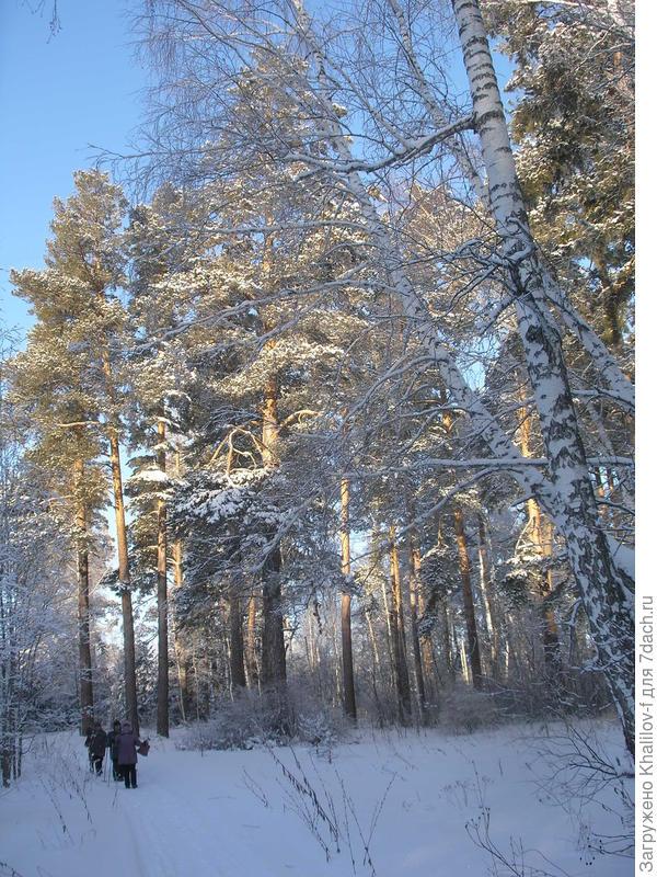 Как хорошо же в зимнем лесу!!!!!