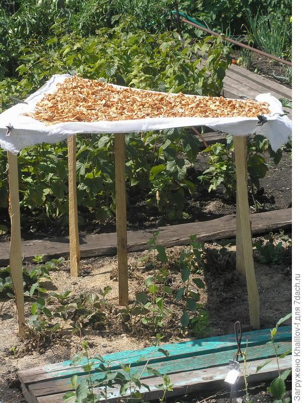 Сушка грибов или яблок в саду в солнечный день