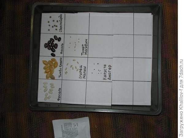 Проверка всхожести семян.