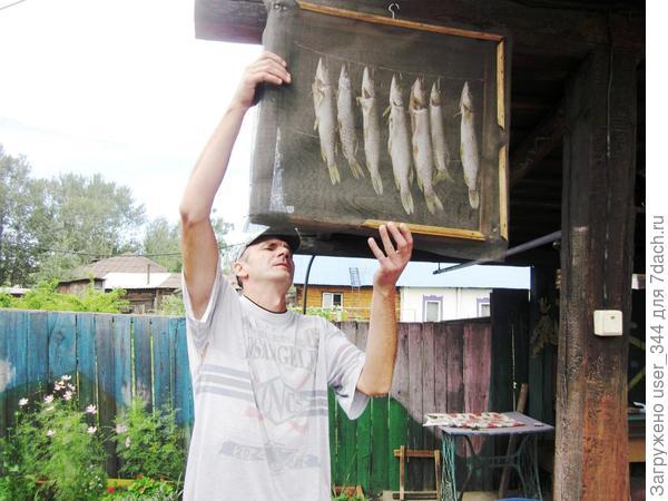 Подвяливание рыбы для дальнейшего копчения