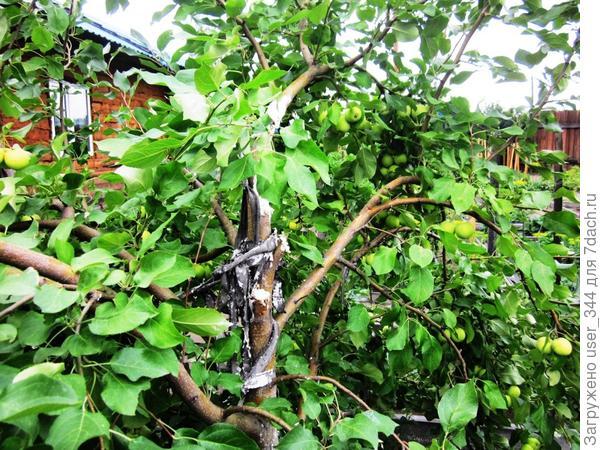 Сломанное дерево от ветра