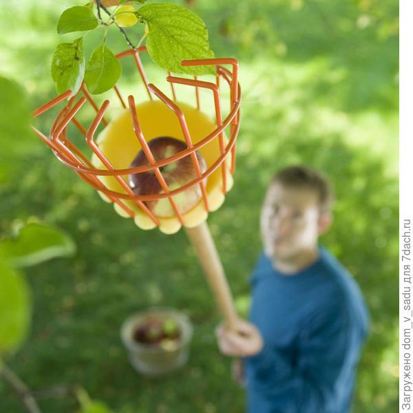 Удобный плодосъемник. Фото с сайта gardeners.com