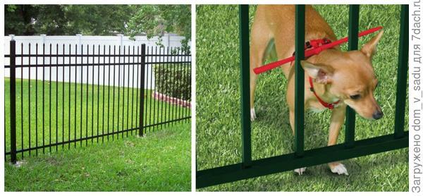 Ограничитель для собак. Фото с сайта lifewithdogs.tv