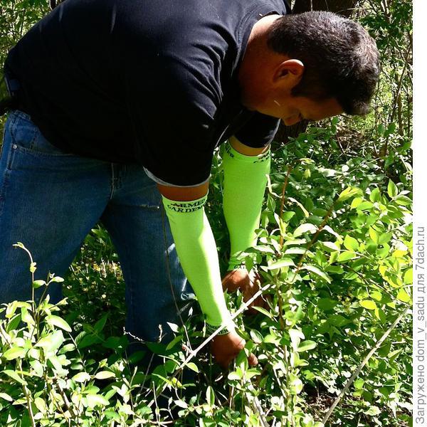 Защита для рук. Фото с сайта thegreenhead.com