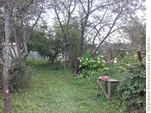 Вишня старая с права и с лева, разлапистые огромные деревья практически голые, на фоне обильно листовых груш и яблонь