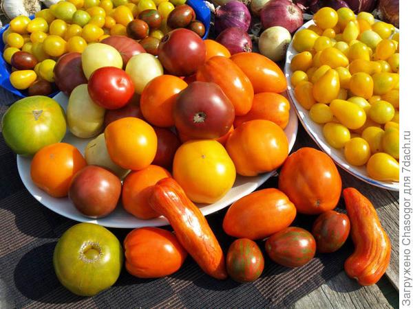 помидорное ассорти