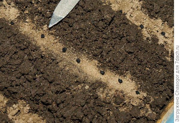 сею порей на песок