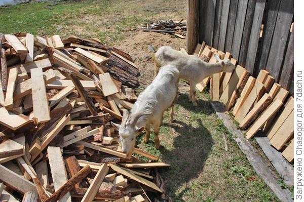 козы ошкуривают дрова