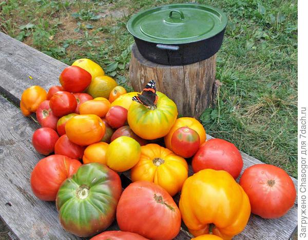 порция томатов для переработки на соус