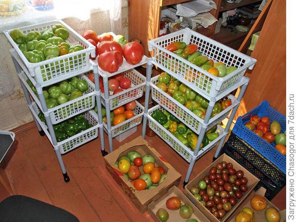 контейнеры для дозревания помидоров