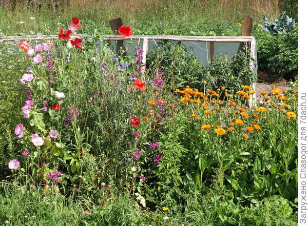 огород в цвету