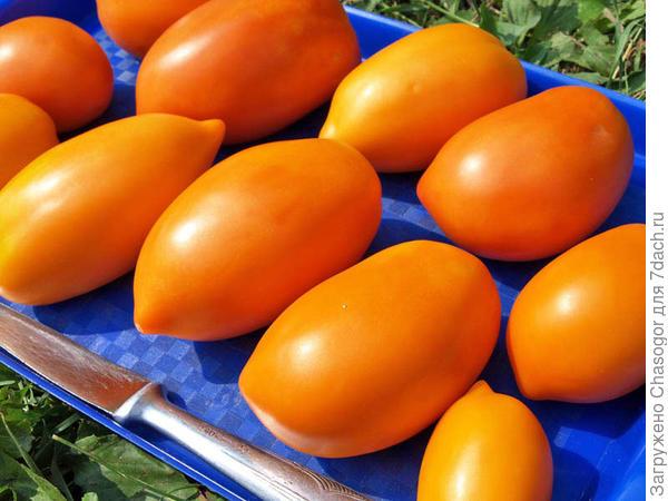 томаты 2010 года