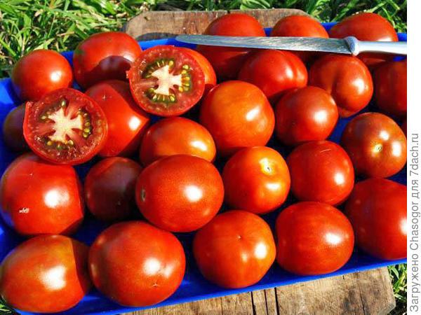 помидоры для рататуя