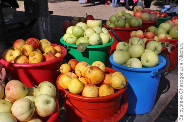 абаканские яблочки