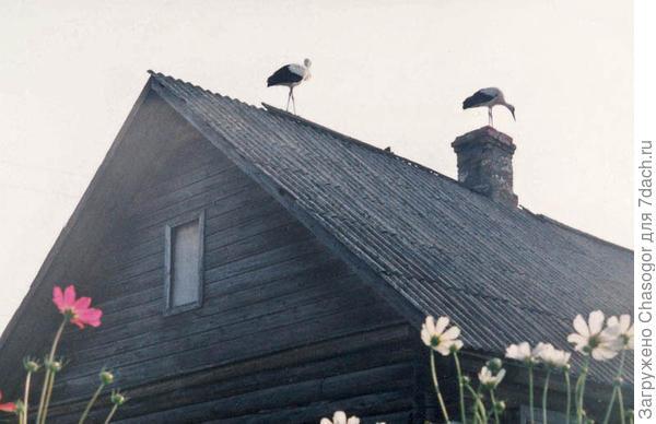 моя крыша