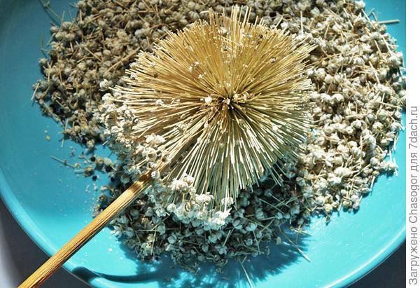семена порея