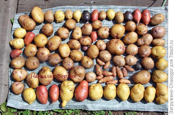 мытый картофель ассорти