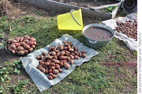 картофель Бургундский
