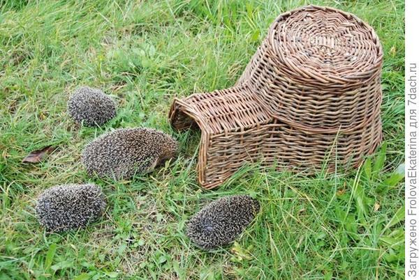 Дом для ежа из лозы. Фото с сайта fallenfruits.co.uk