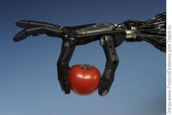 Робот, выращивающий помидоры. Фото с сайта newsone.ws