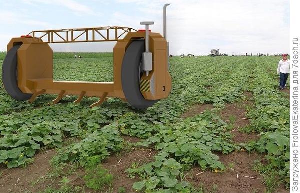 Робот- сборщик огурцов. Фото с сайта yuga.ru