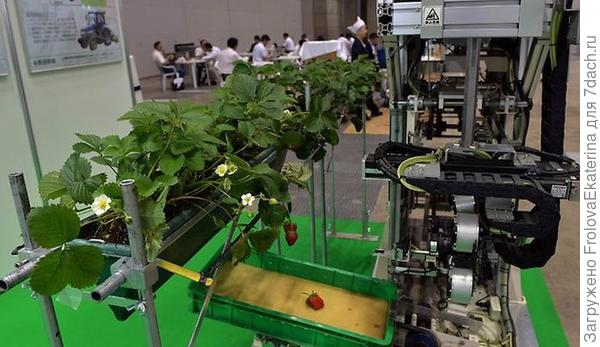 Робот-сборщик ягод из Японии. Фото с сайта the-one.ucoz.ru