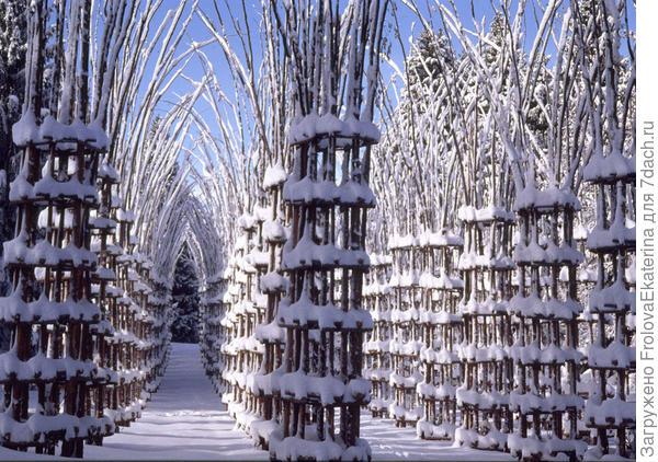 Собор Вегетале. Фото с сайта mobypicture.com