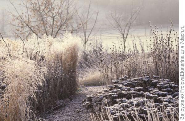 Сад Пита Удольфа зимой. Фото с сайта theplanthunter.com.au