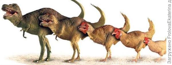 Куры считаются прямыми потомками динозавров. Фото с сайта uefsfutsal.com