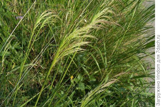 трава