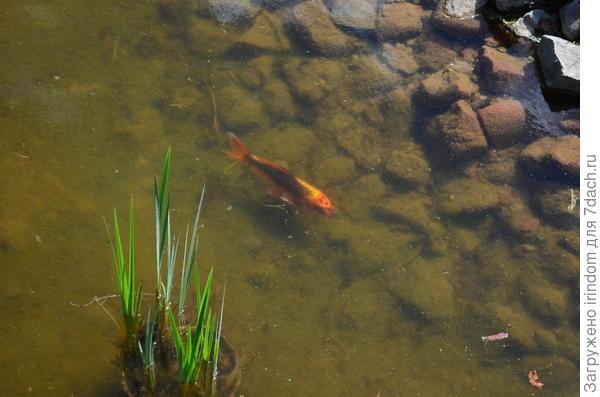 с рыбками