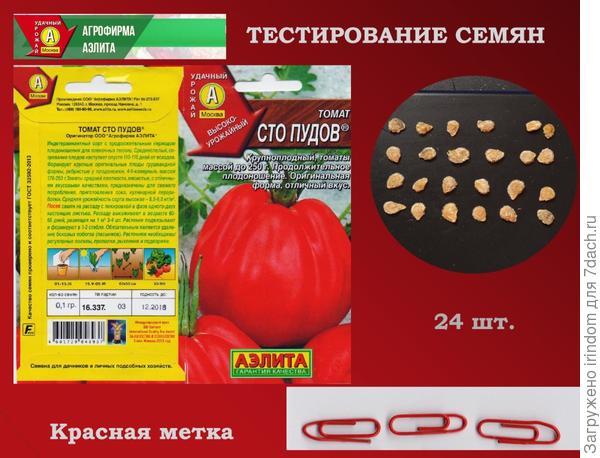 Томат Сто Пудов - многообещающее название