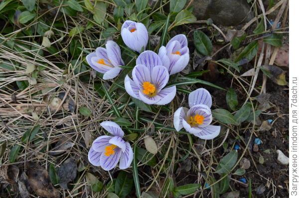 В весну остается только верить))