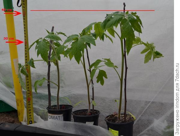 Растения перед высадкой в грунт