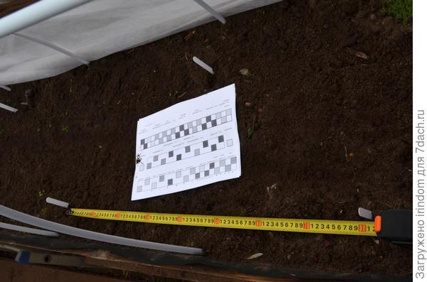 Разметка под посадку в шахматном порядке. Между растениями 80 см.