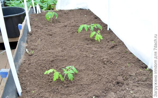 На одном квадратном метре три растения.