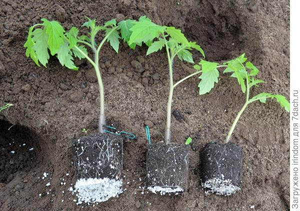 Все растения с хорошо развитой корневой системой.