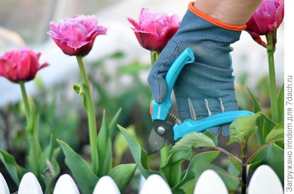 Срезать цветы для букета